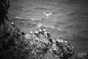 Nord | Süd 12 – Helgoland