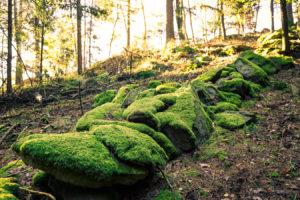 Bayerischer Wald 5