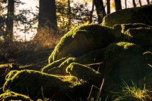 Bayerischer Wald 6