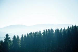 Bayerischer Wald 13