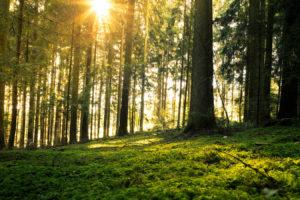 Bayerischer Wald 4