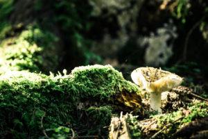 Bayerischer Wald 8