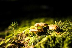 Bayerischer Wald 7