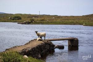 Connemara 9